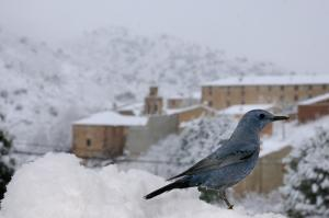 Aves y Pájaros